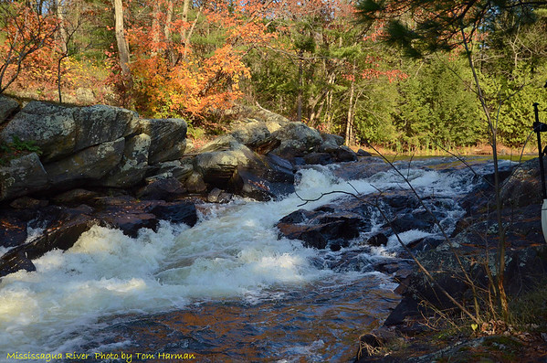 Mississagua River 23-Oct-11_DSC_5057