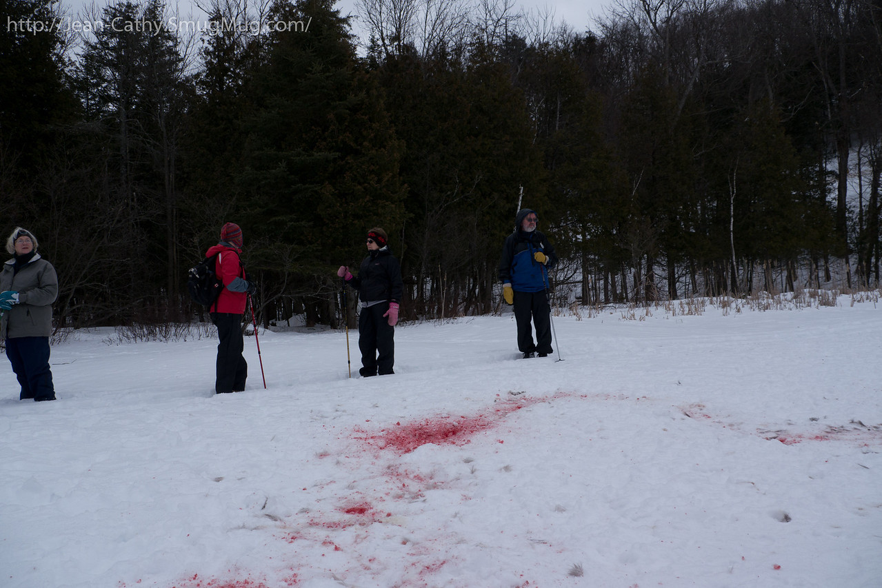We inspect what's left from yesterday's deer kill. Nature is efficient!