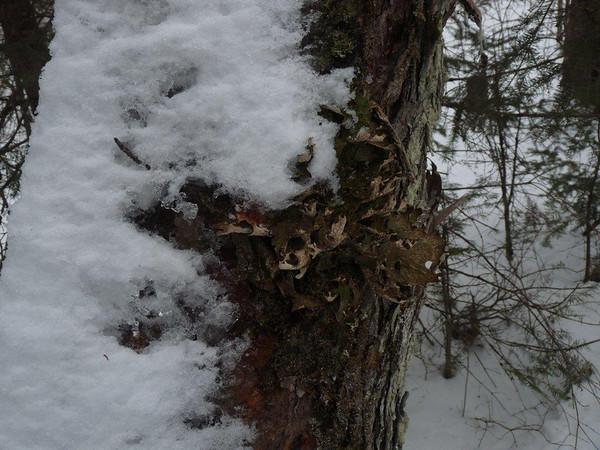 Bondi Weekend: Algonquin Park Snowshoeing - Track & Tower Trail, January 2012. Photo by John Ambrose