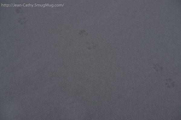 Shy creatures, all they leave are tracks.... and