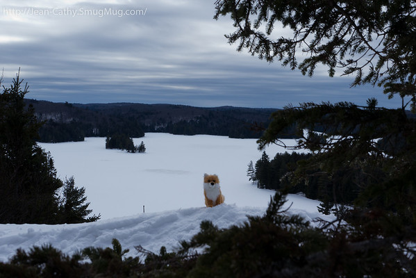 Foxicle made it to the lookout on the Track & Tower Trail.