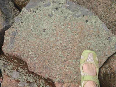 D4 pretty green lichen