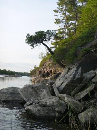 D5 bent tree silhouette