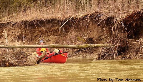 Mad River 14-Apr-13 - Tom Harman (23)