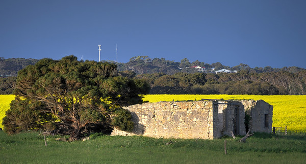 Ruins and Canola2