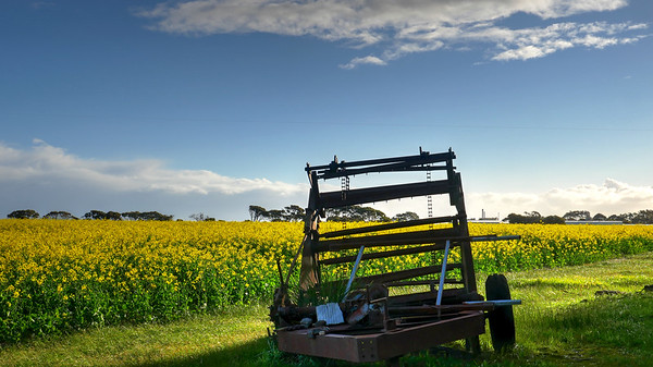 Machine with Canola