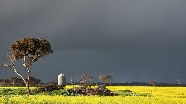 Silo and Canola