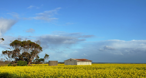Shed, Tank and Canola