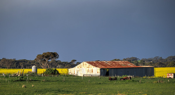 Shed and Canola