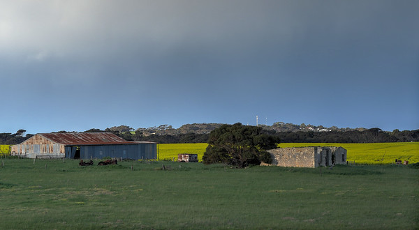 Shed, Ruins and Canola