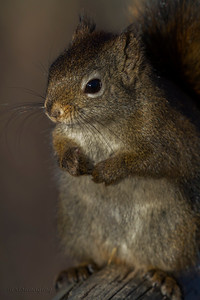 IMG_1984 squirrel