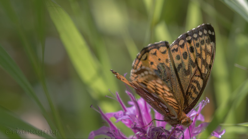IMG_8159 butterfly