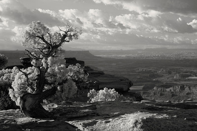 Canyon Rim - UTAH