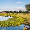 Barnby Dun canal long pond