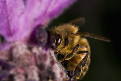 Shy Bee