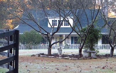 Braswell Farms Canton Georgia (5)