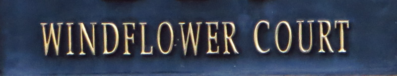 Windflower Canton GA (13)