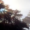 Fog 1742