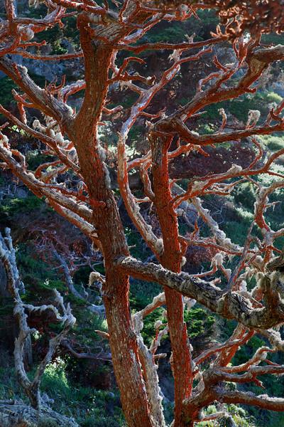 Point Lobos 1609