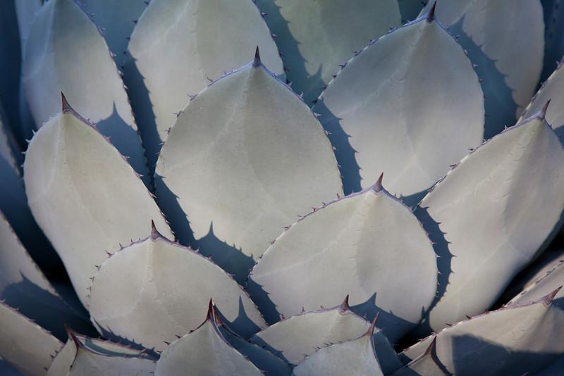 Cactus 2210