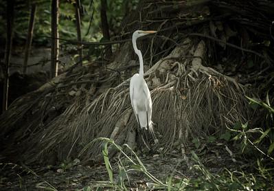 Dark Stork 24 x 36