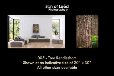 005 Tree Rendlesham