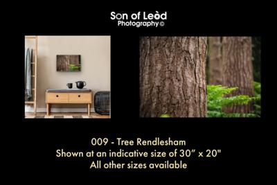 009 Tree Rendlesham
