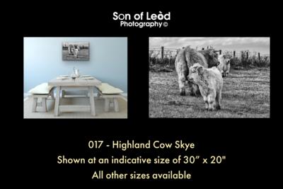 017 Highland Cow Skye