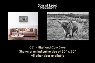 031 Highland Cow Skye