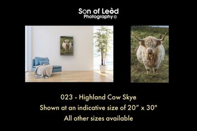 023 Highland Cow Skye