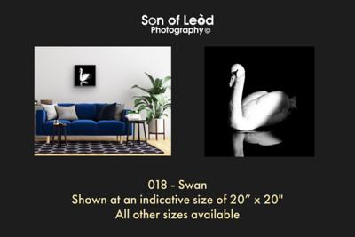 018 Swan
