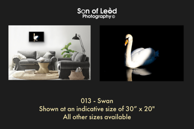 013 Swan