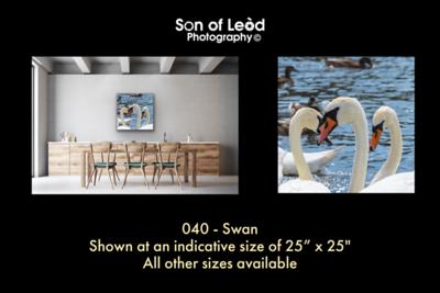 040 Swan