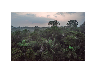 Yasuni rainforest canopy
