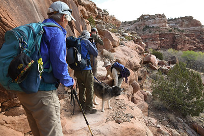 Getting both two-legged and four-legged friends up on to narrow, rocky shelves can be interesting  Dave decided to take an easier route.