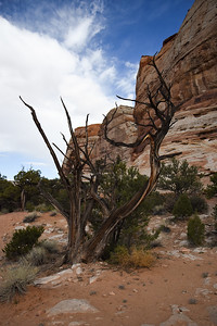 An interesting juniper snag.