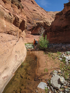 Finally, water begins to appear in the creek bed, and rocks give way to sand.