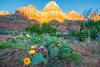 Spring in Zion Canyon