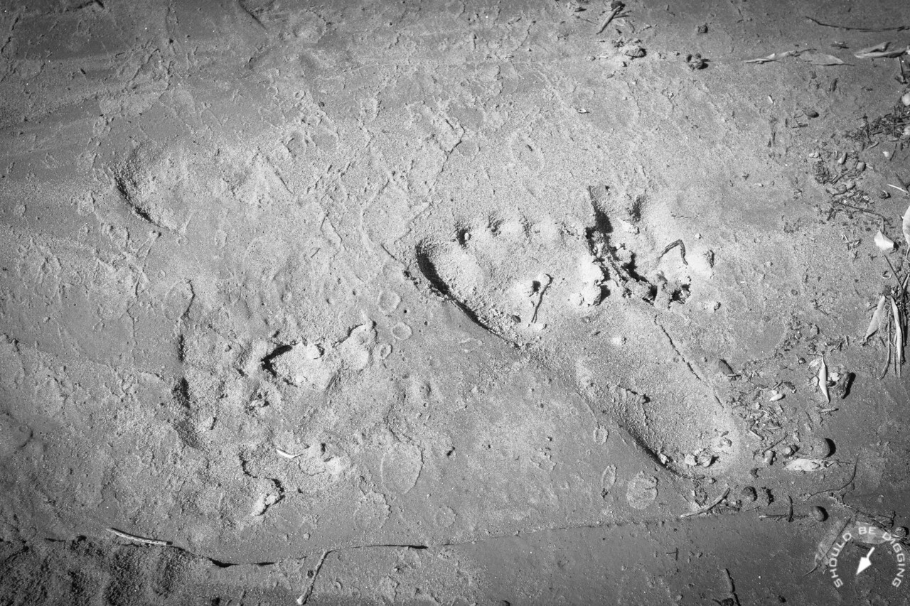 Footprint and animal track on the canyon floor near White House Ruin in Canyon de Chelly