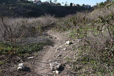The lower path still has a lot of castor bean.