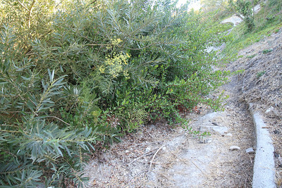 Where the Euphorbia grows. We are still not sure where the PVLC property ends. Suggested adding a welcome sign to this end of the trail.