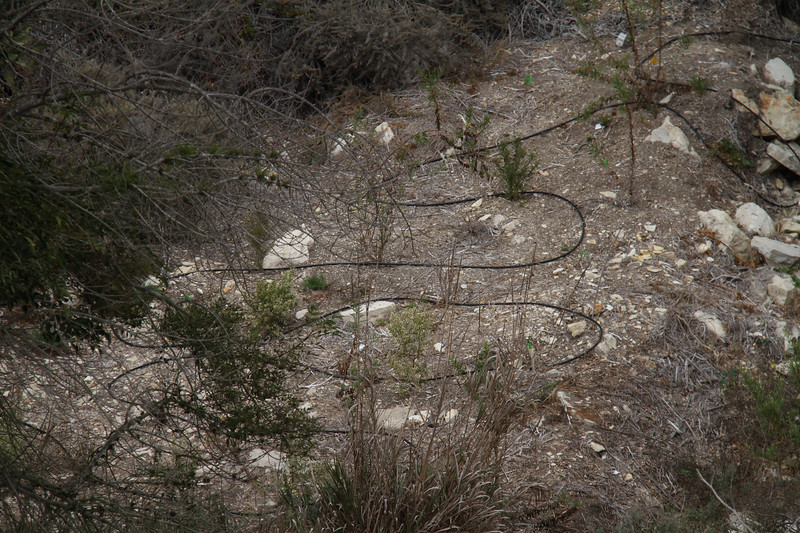 Irrigation lines down in the canyon bed.