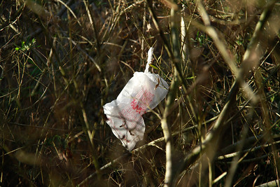 A plastic bag caught in the willows down in the canyon. It would be next to impossible to get that out of there.