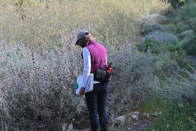 Joan inspects the Purple Sage at Photo Point 2.