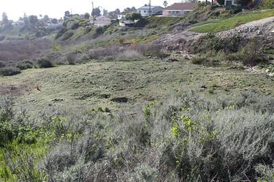 Photo Point 5, the restoration area.