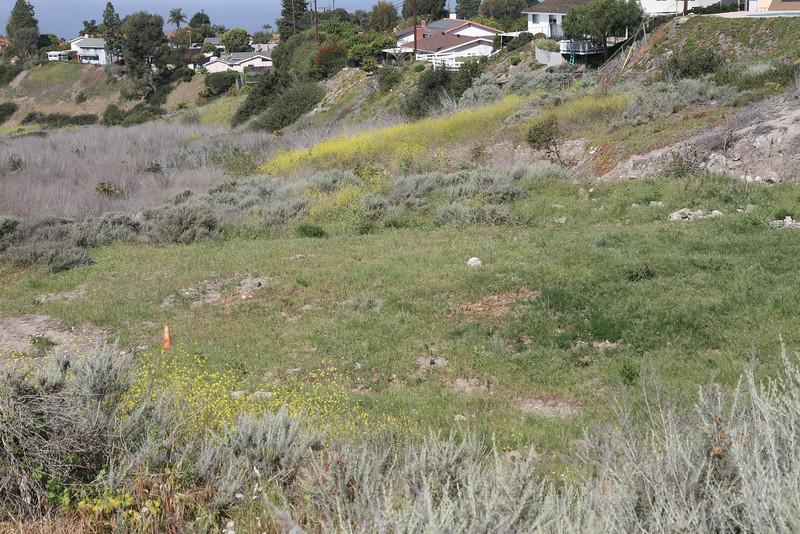 Photo Point 5, The Restoration Area