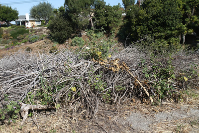 Piles of debris from clearing the path.