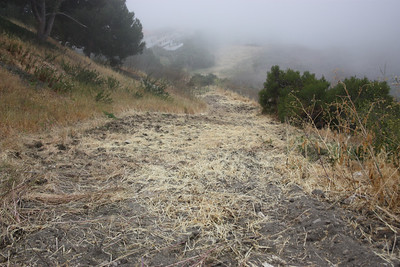 The Arroyo Lupine is gone. This was very hard to walk on. It is steep and there was loose dirt with ruts under the debris.