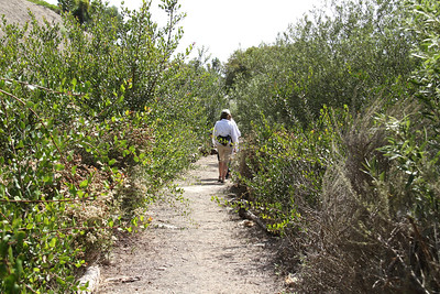 The plants on both sides of the upper path have grown.