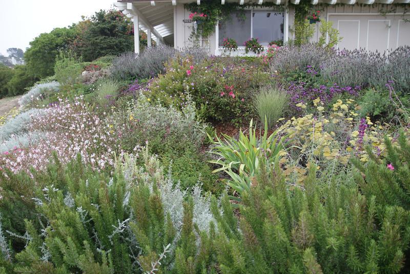Stephen Kowalski's Garden